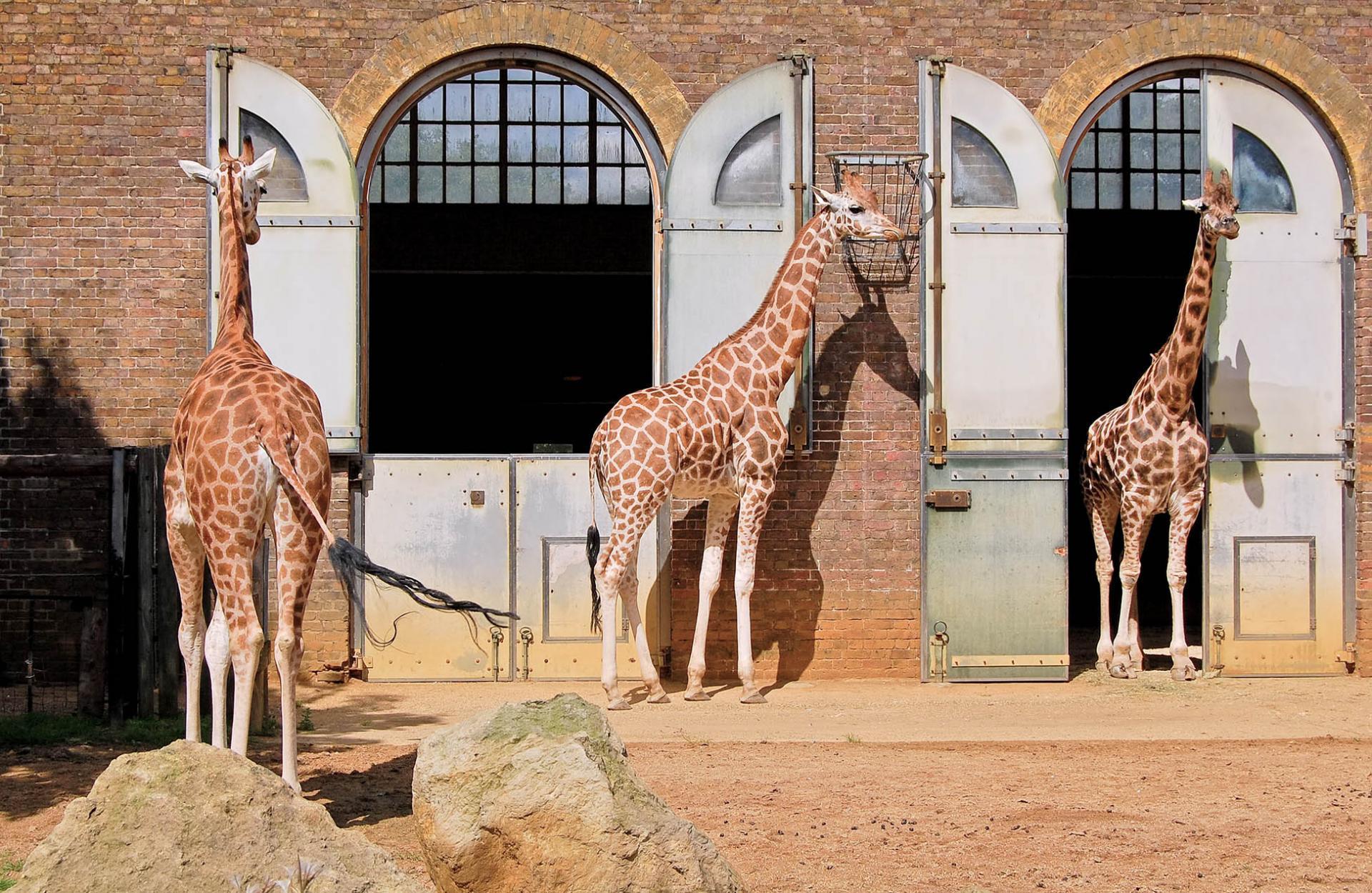 El Zoológico de Londres