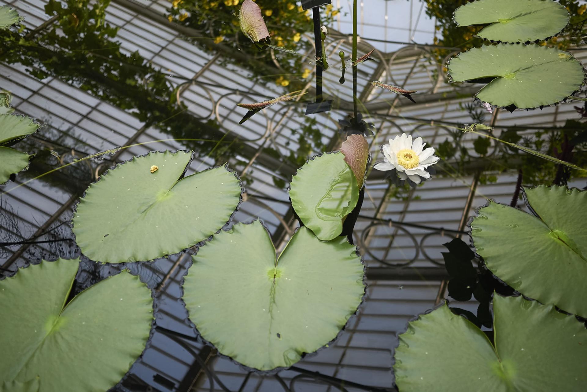 Royal Botanic Garden Kew